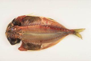 魚 カロリー