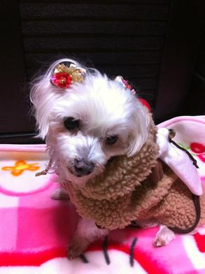愛犬アリス.jpg