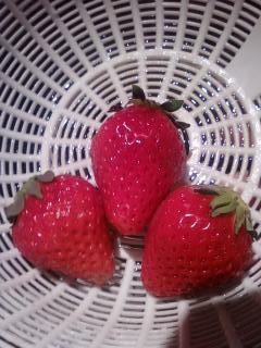 苺 とちおとめ