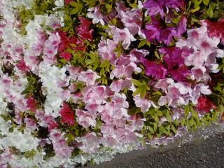 サツキの花びら