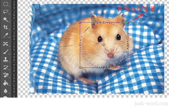 photoshop CC 選択範囲のサイズを変更する